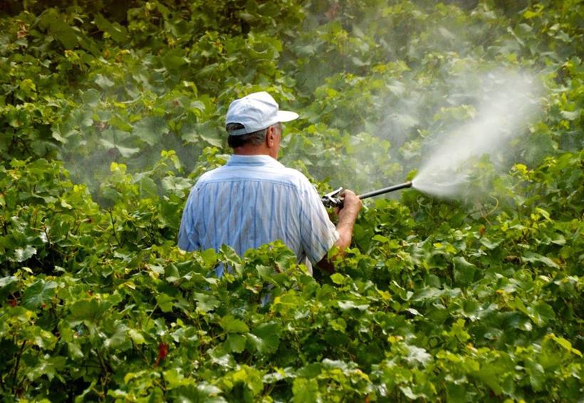 'Pésima' la gestión de plaguicidas en México: Greenpeace | El Imparcial de Oaxaca