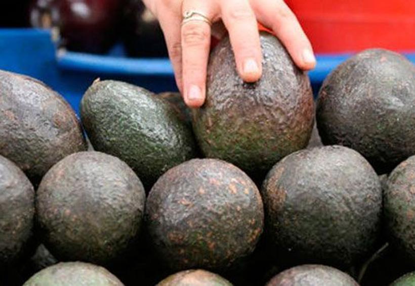 Kilo de aguacate se vende hasta en 99 pesos: Profeco | El Imparcial de Oaxaca