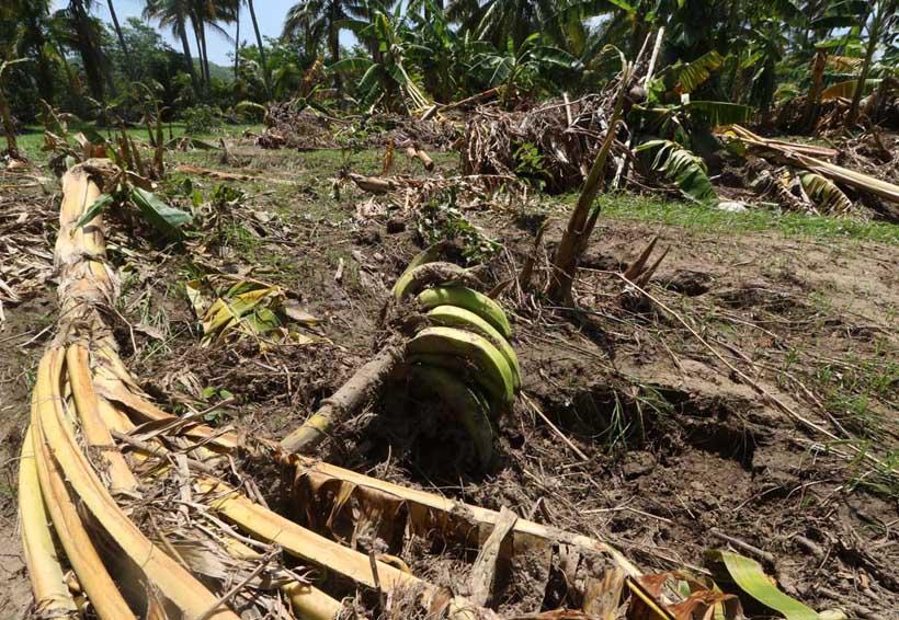 Afectan Beatriz y Calvin 9 mil 700 has. de cultivo en Oaxaca | El Imparcial de Oaxaca