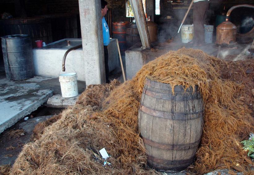 Exponen uso del bagazo en industria del mezcal | El Imparcial de Oaxaca