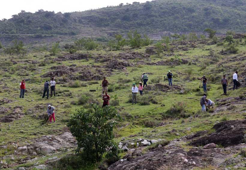 Se compromete  Mitla con la vida, plantan 3,500 árboles | El Imparcial de Oaxaca