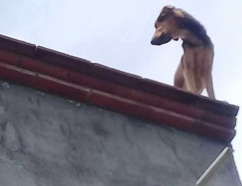 Rescatan a perros en Santa Cruz Xoxocotlán | El Imparcial de Oaxaca