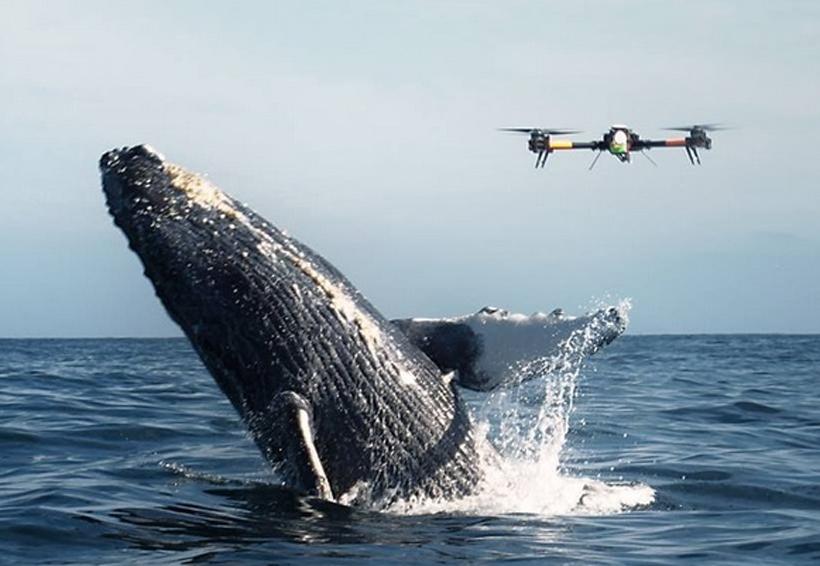 Universitarios monitorean a ballenas, con drones | El Imparcial de Oaxaca
