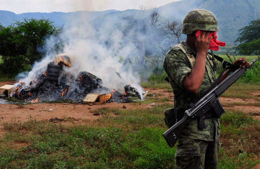 Queman mariguana en Ejutla de Crespo | El Imparcial de Oaxaca