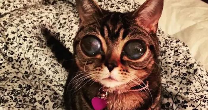 Matilda, la gatita que cautiva en Internet por su extraña enfermedad ocular   El Imparcial de Oaxaca