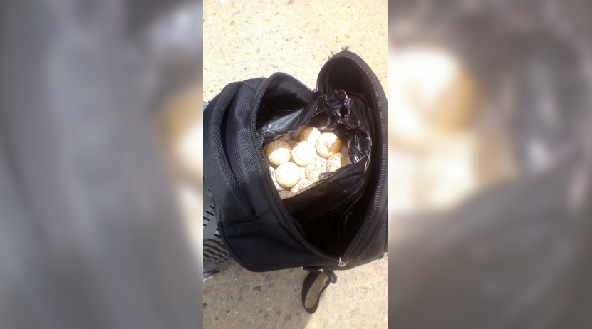 Incautan huevos de  tortuga en  un autobús en Santa María Tonameca | El Imparcial de Oaxaca