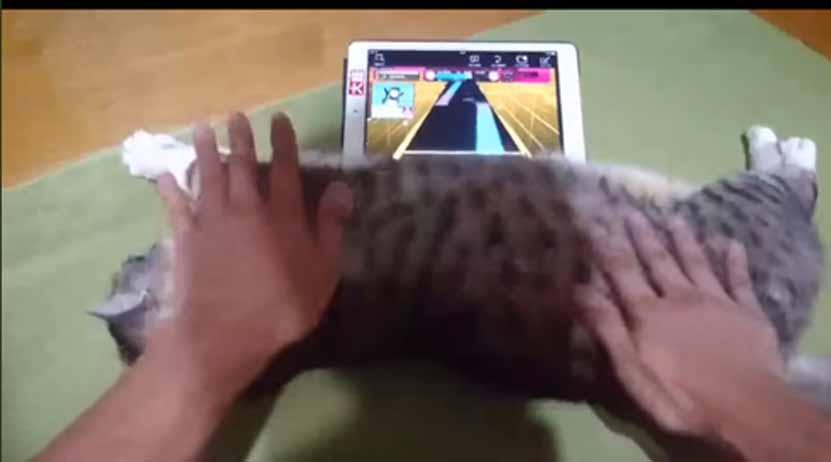 Video: Joven japonés utiliza la barriga de su gato para manejar la pantalla de su tablet | El Imparcial de Oaxaca