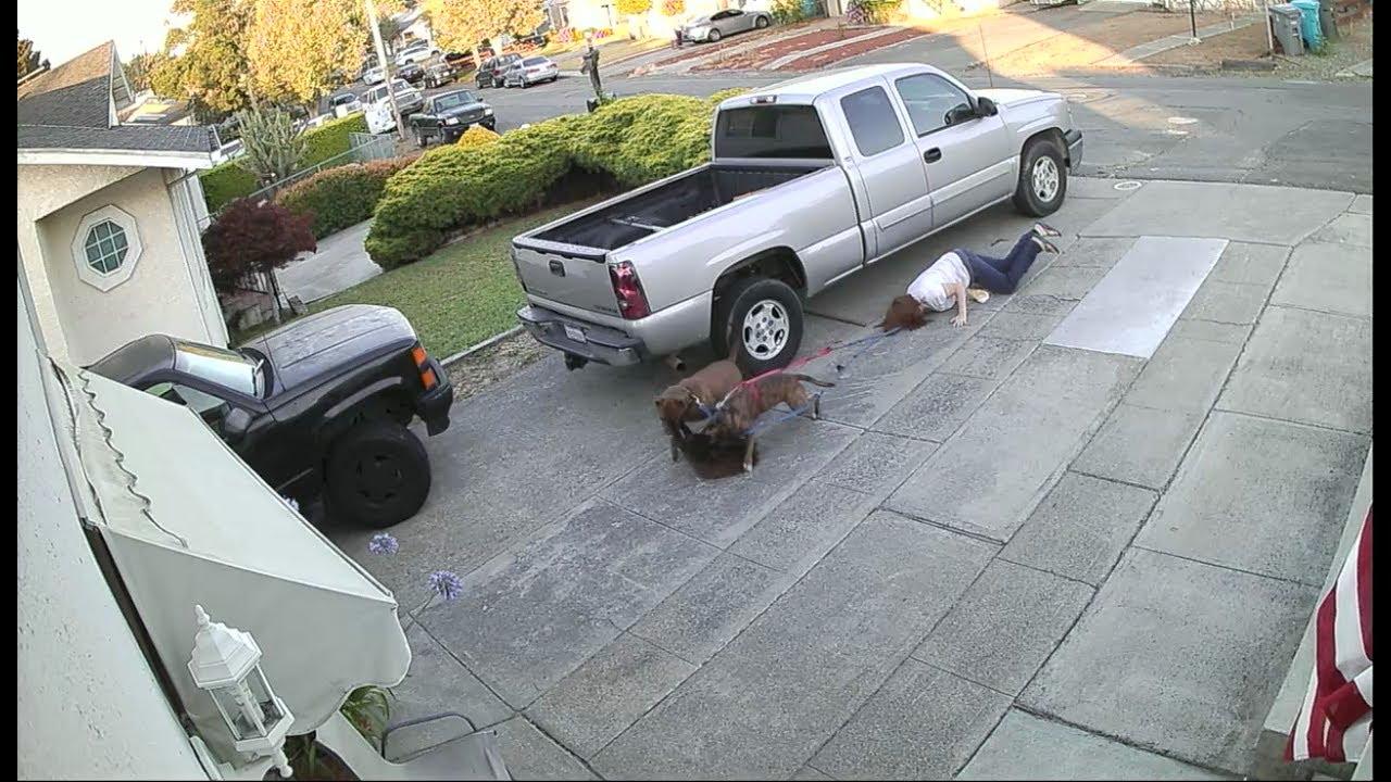 Video: Dos pitbulls casi despedazan a un gato que se relajaba fuera de su casa | El Imparcial de Oaxaca