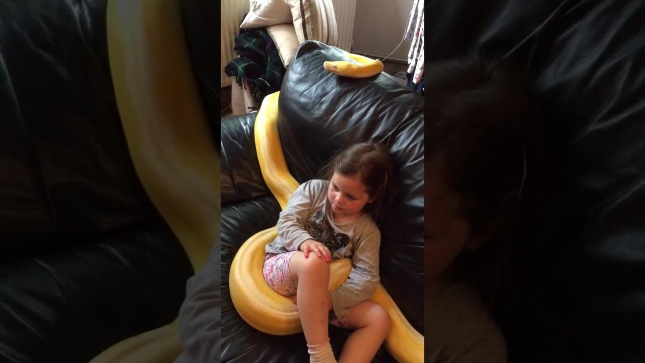 Deja a su hija pequeña viendo la televisión en el sofá con una serpiente pitón | El Imparcial de Oaxaca