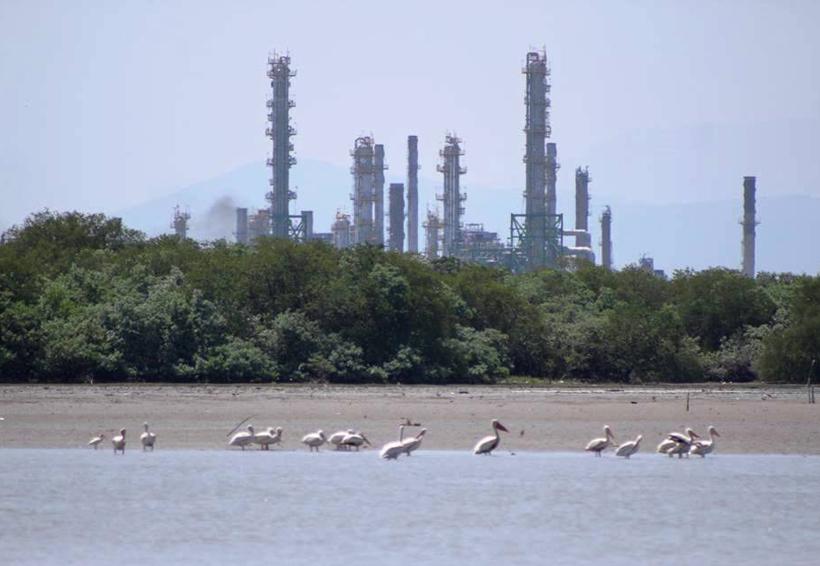 Tardarán años en resarcir los daños ambientales a manglares en el Istmo | El Imparcial de Oaxaca