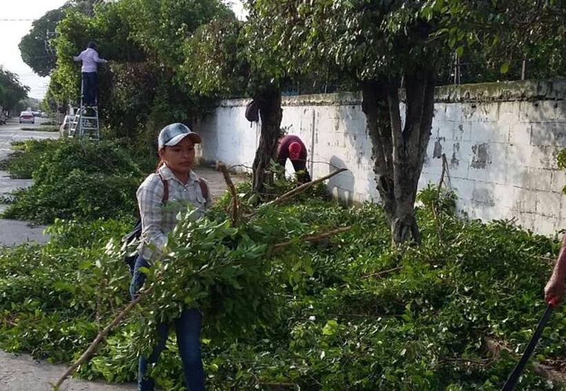 Inicia poda de árboles en Tuxtepec | El Imparcial de Oaxaca