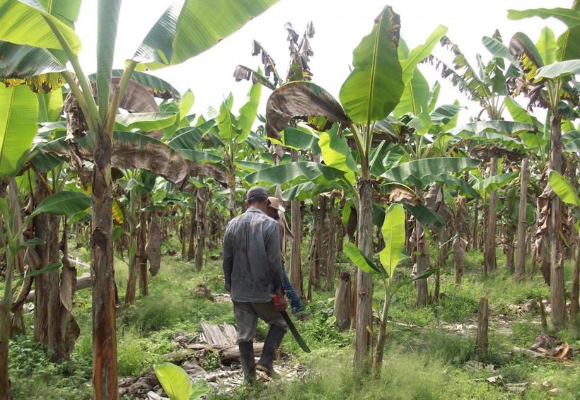 Advierten un solo pago  de daños a productores de Tuxtepec | El Imparcial de Oaxaca