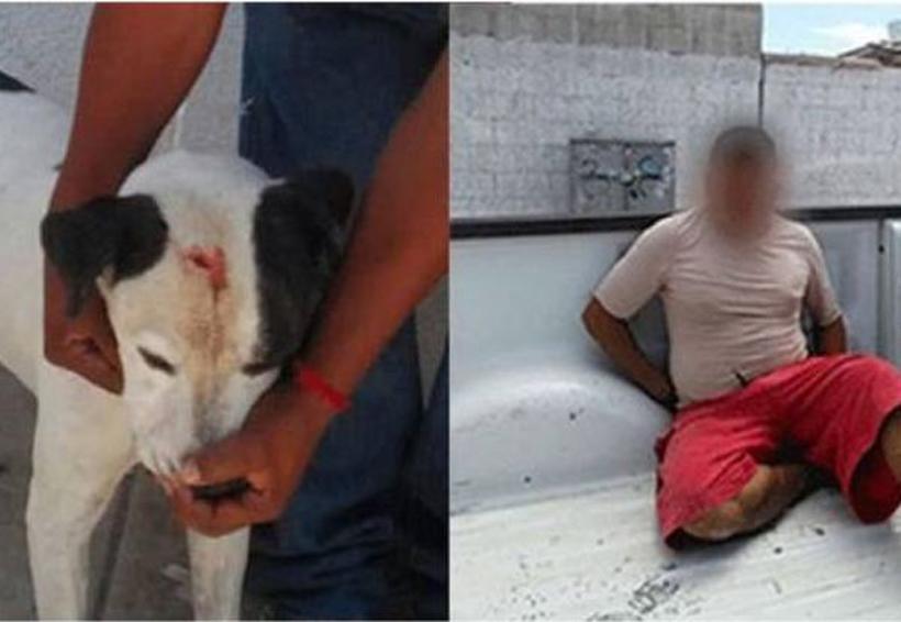 Golpea con martillo a su perro, lo arrestan por maltrato | El Imparcial de Oaxaca