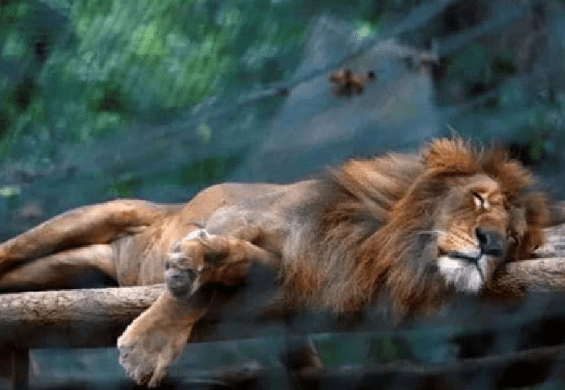 Roban animales de zoológicos para comérselos | El Imparcial de Oaxaca