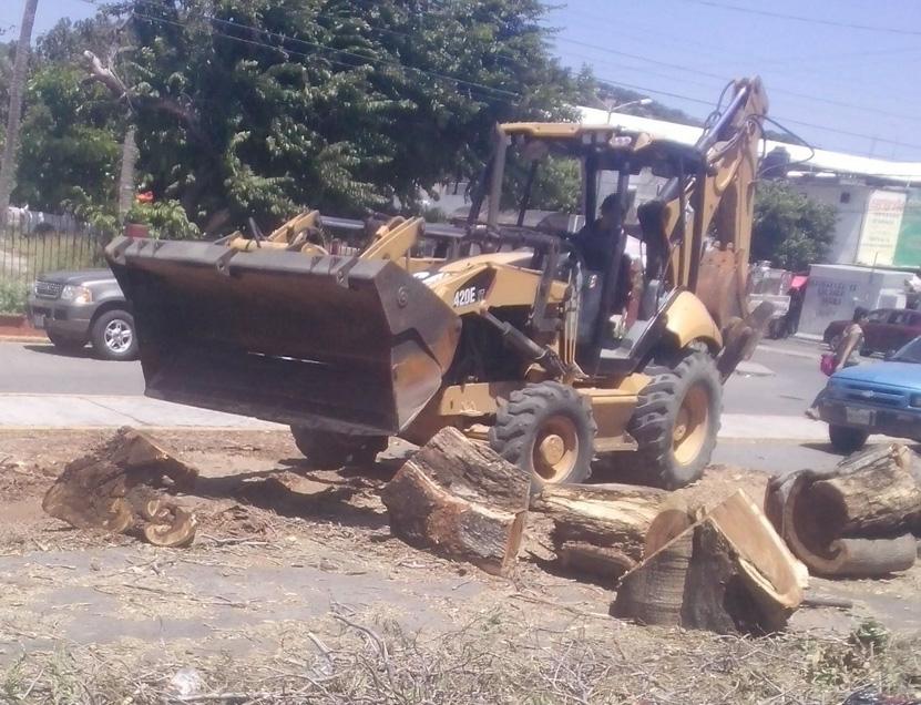 Retiran árbol que obstruía la calle en Salina Cruz   El Imparcial de Oaxaca