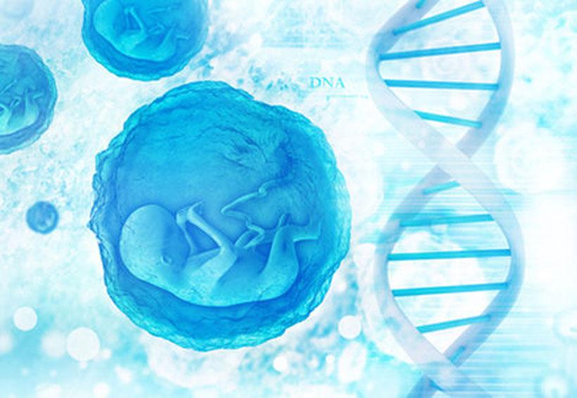 Científicos corrigen defecto en ADN de embriones humanos | El Imparcial de Oaxaca