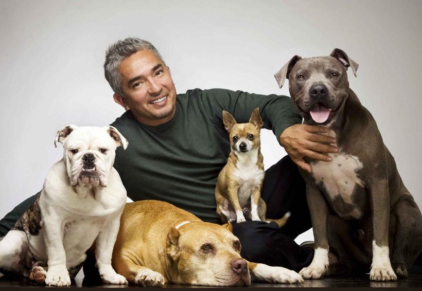 César Millán creó audiolibros exclusivos para perros   El Imparcial de Oaxaca
