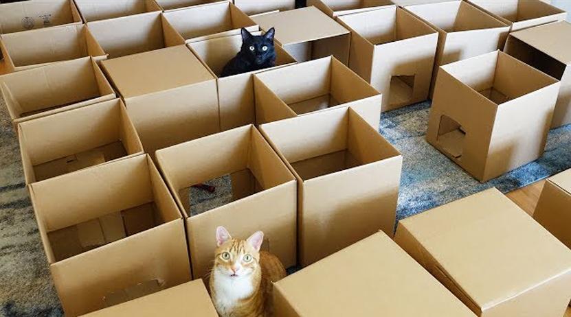 Joven crea laberinto con 50 cajas de cartón para que sus gatos se diviertan | El Imparcial de Oaxaca
