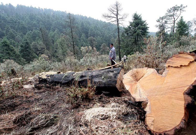 Deforestan en Oaxaca al año 30 mil hectáreas | El Imparcial de Oaxaca