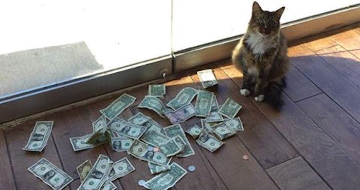 Un gato en Oklahoma roba dólares a transeúntes y su dueño los dona a un asilo de personas sin hogar | El Imparcial de Oaxaca