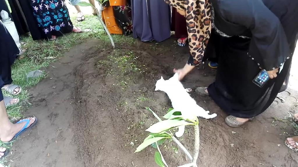 Un gato se niega a abandonar una tumba e incluso intenta cavarla   El Imparcial de Oaxaca