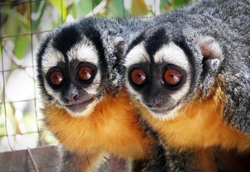 Anuncian nuevas especies en peligro de extinción   El Imparcial de Oaxaca