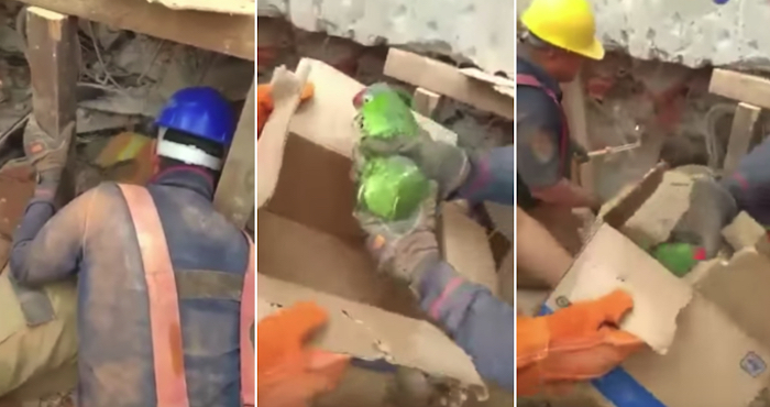 Un perico es rescatado de entre los escombros de un edificio en Lindavista 5 días después del sismo | El Imparcial de Oaxaca