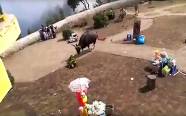Un enorme bisonte irrumpe violentamente en un pueblo turístico   El Imparcial de Oaxaca