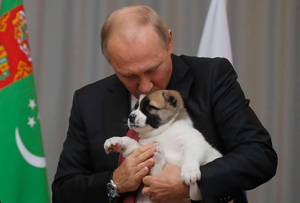 Putin recibe cachorro de regalo, gesto conmueve en redes   El Imparcial de Oaxaca