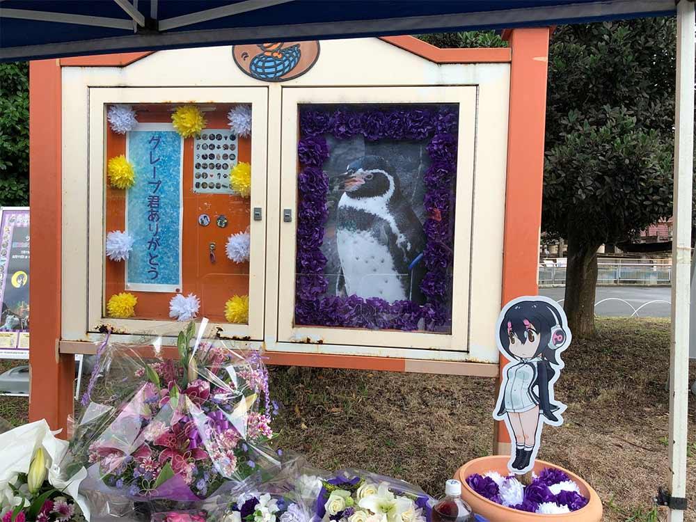 Muere pingüino junto al cartel del que estaba 'enamorado' | El Imparcial de Oaxaca