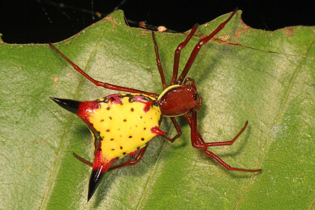 Esta araña que se parece a Pikachu se ha vuelto viral   El Imparcial de Oaxaca