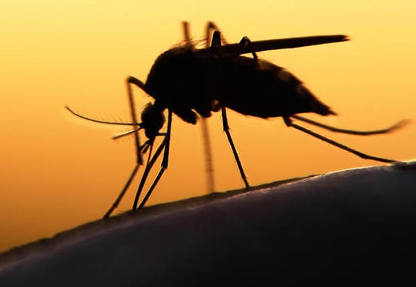 Dos nuevas amenazas después del zika | El Imparcial de Oaxaca