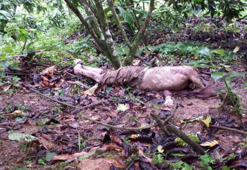 Hallan cadáver putrefacto   El Imparcial de Oaxaca