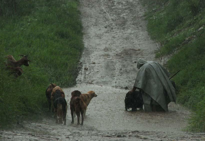 Lluvias afectan 10 mil hectáreas de cultivos en Oaxaca   El Imparcial de Oaxaca