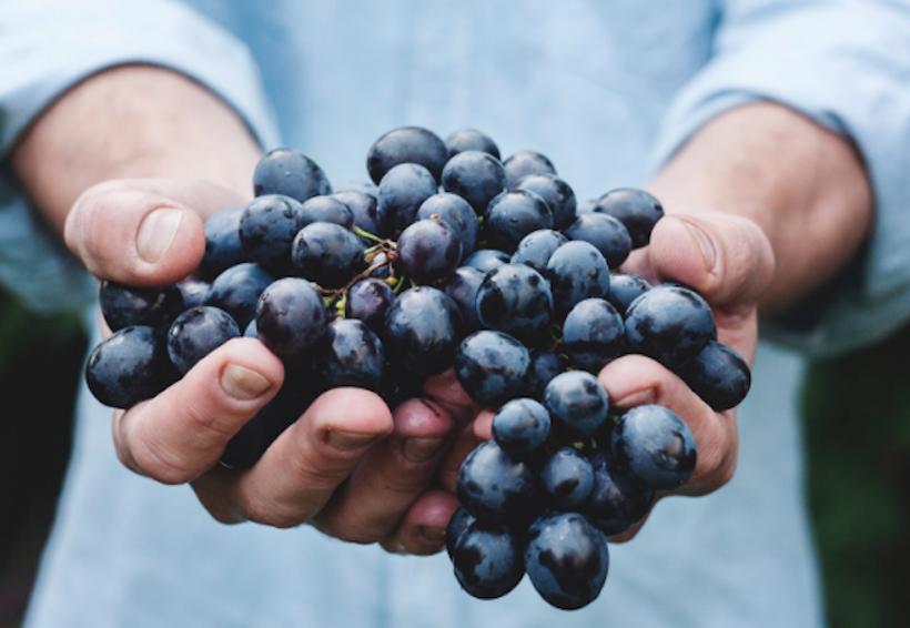 Consumo de uva pasa puede reducir niveles de glucosa y presión arterial | El Imparcial de Oaxaca