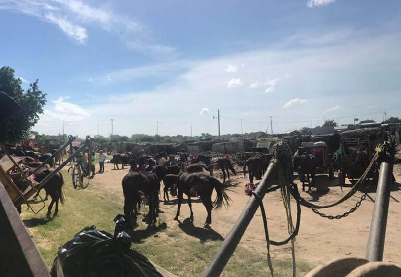 Caballos, burros y mulas guían carretas para remover escombros en Juchitán, Oaxaca   El Imparcial de Oaxaca