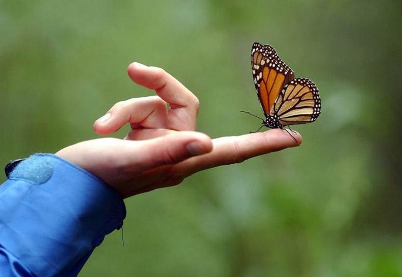 Profepa realiza acciones de vigilancia en Reserva de la Mariposa Monarca | El Imparcial de Oaxaca