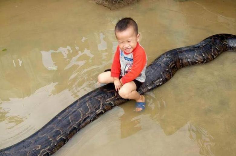 Video: Niño jugando con enorme serpiente se vuelve viral | El Imparcial de Oaxaca