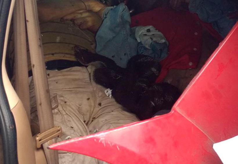 Hallan muertos a dos hermanos en el interior de una camioneta | El Imparcial de Oaxaca
