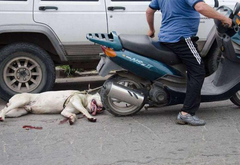 Video: Amarra su perro a la moto y lo arrastra por las calles | El Imparcial de Oaxaca