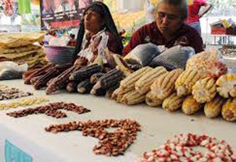 Ni Trump detendrá el augedel maíz de Oaxaca en EU | El Imparcial de Oaxaca
