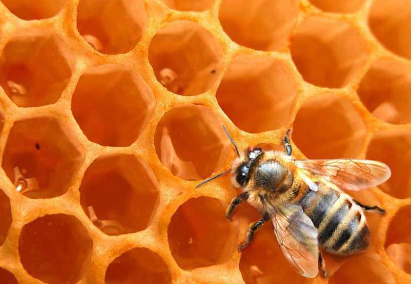 Un estudio halla pesticidas en el 75% de muestras de miel de todo el mundo   El Imparcial de Oaxaca