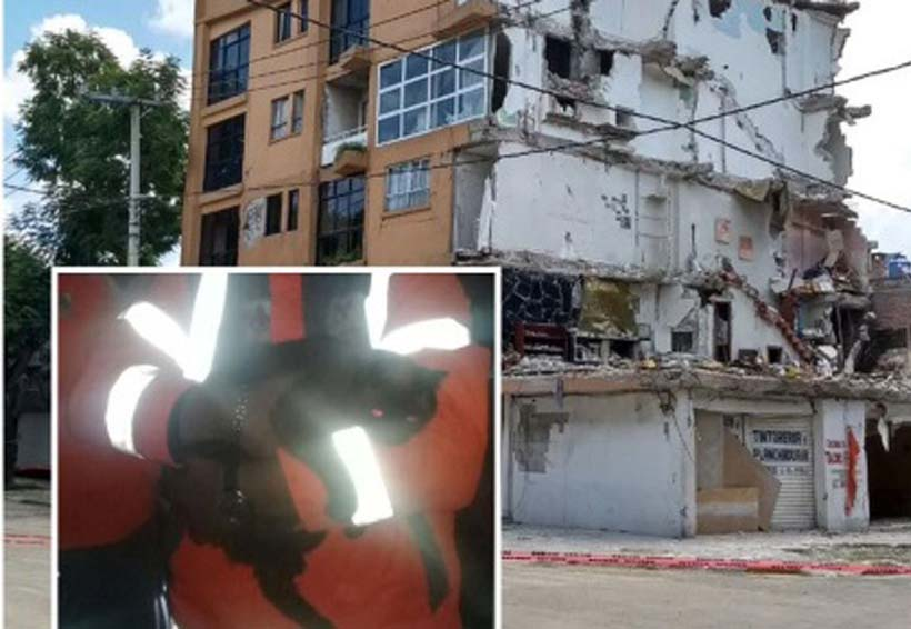 Después de 23 días atrapada, rescatan a gata de edificio a punto de ser demolido | El Imparcial de Oaxaca