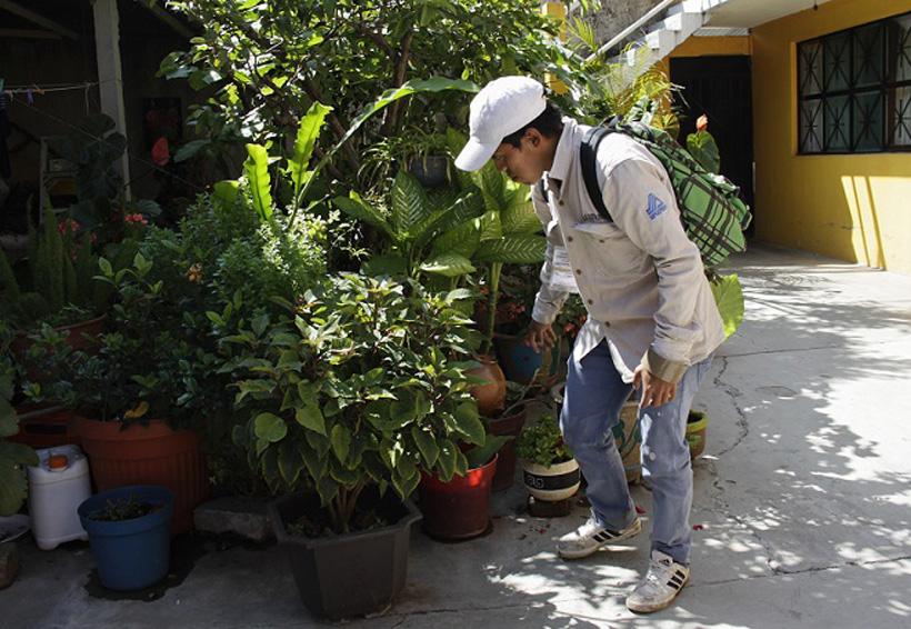 Urge combatir el mosquito en la Mixteca de Oaxaca   El Imparcial de Oaxaca