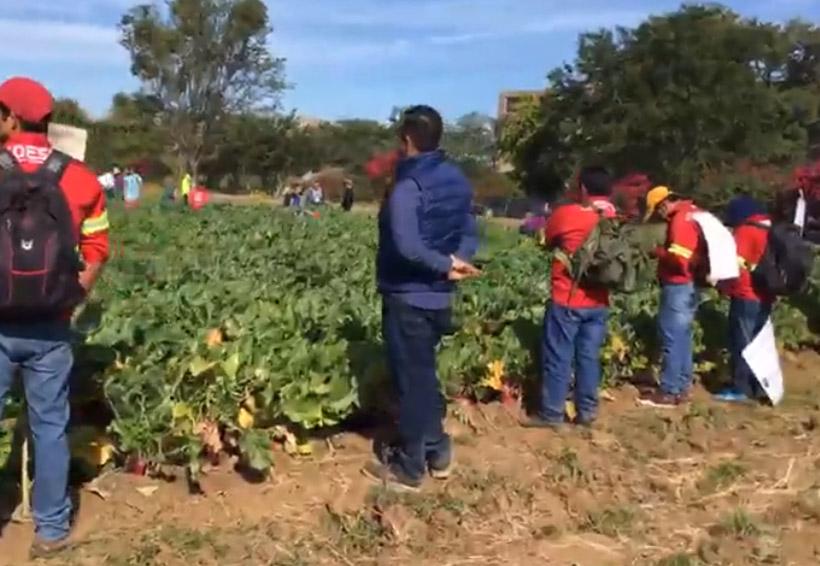 En plena cosecha de rábanos, estalla  protesta en Coesfo   El Imparcial de Oaxaca