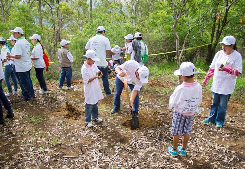 Impulsan reforestación y mantenimiento de árboles en Oaxaca | El Imparcial de Oaxaca
