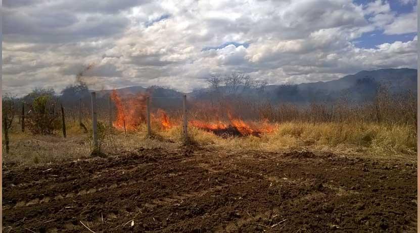 Rescatan a conejos de fuego en Zaachila, Oaxaca | El Imparcial de Oaxaca