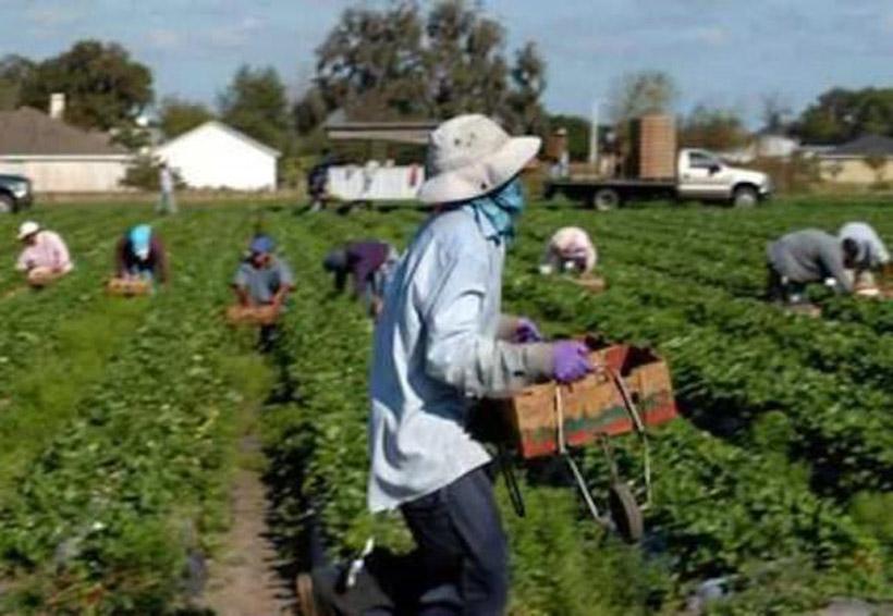 Impulsan programa de trabajadores agrícolas en Oaxaca | El Imparcial de Oaxaca