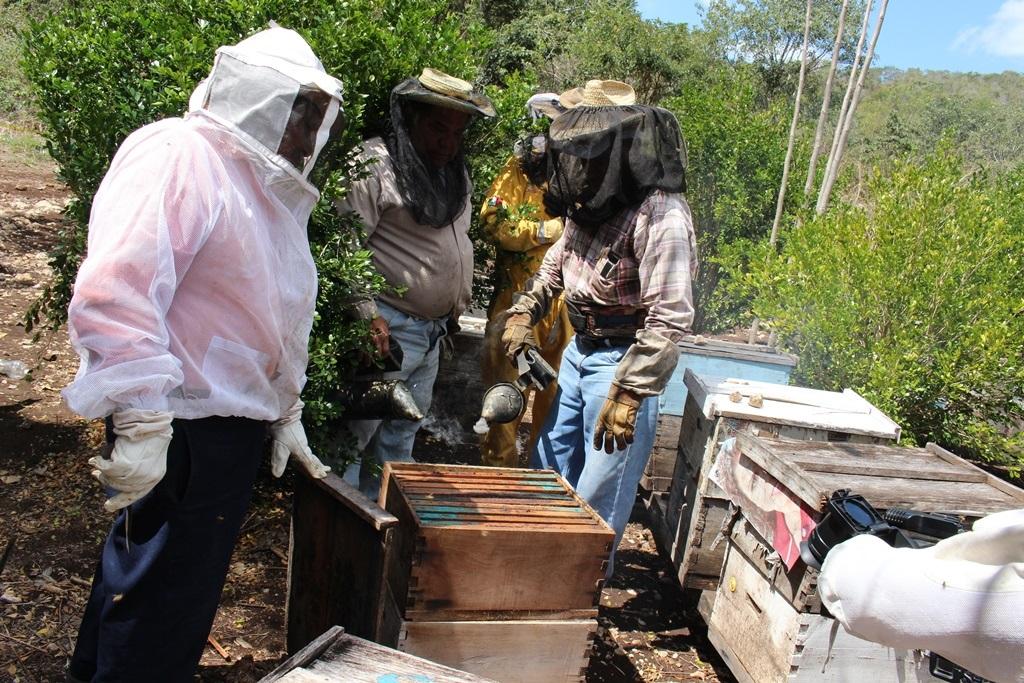 Buscan consolidar la producción de miel en Oaxaca | El Imparcial de Oaxaca