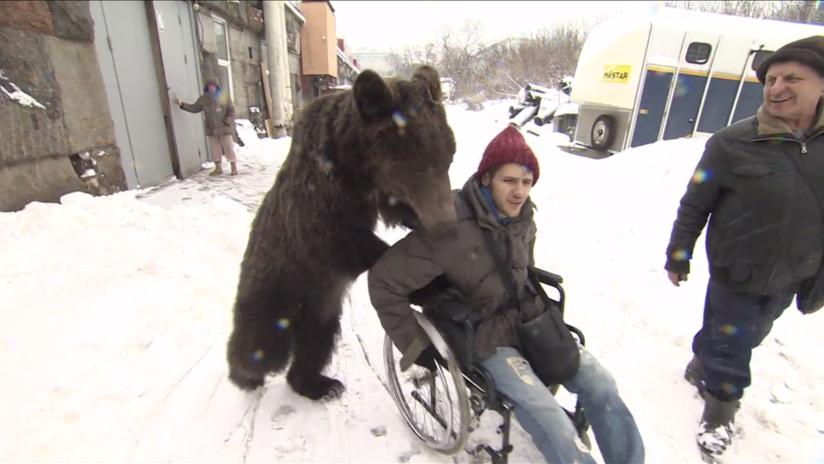 Un oso empuja la silla de ruedas de su entrenador, que sufrió un grave accidente | El Imparcial de Oaxaca